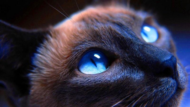 Глазные капли для кошек: список препаратов и описание