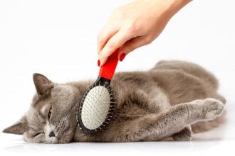 Как правильно выбрать расческу и вычесывать кошку