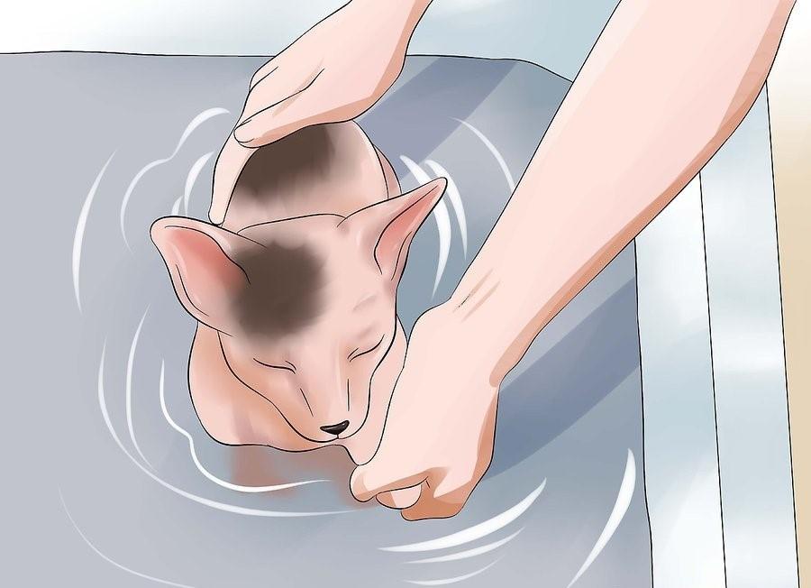 Опускать сфинкса в воду нужно медленно и осторожно