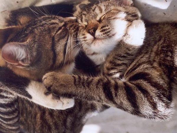 При течке у кошки можно купировать процесс медикаментами