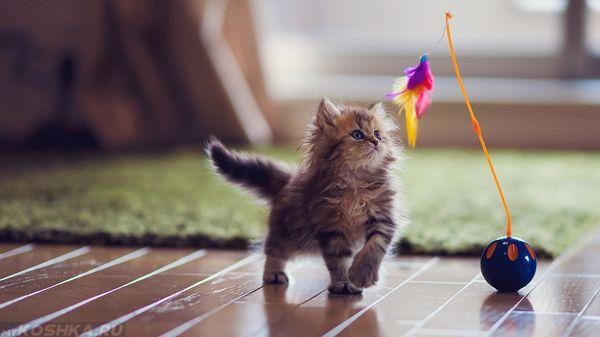 Кошек можно дрессировать