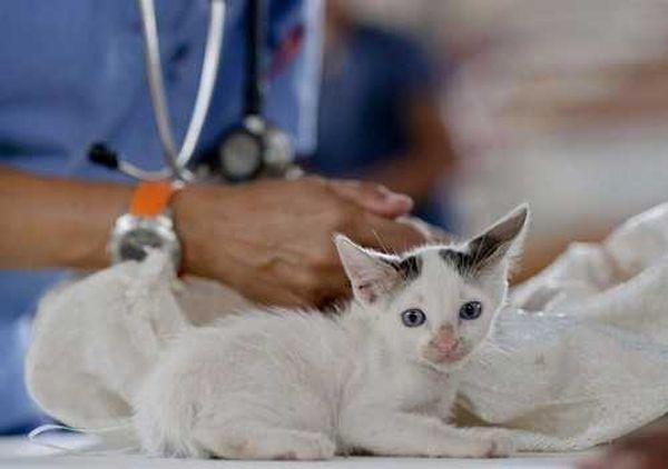 коронавирус у кошек симптомы и лечение болезни