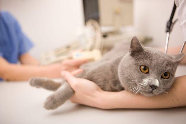 В мире коронавирусом заражено 67% всей популяции котов