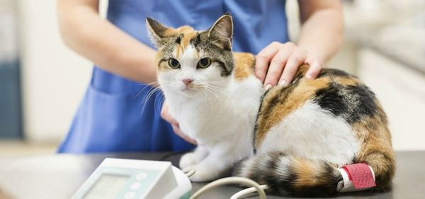 4% животных имеют врожденную устойчивость к коронавирусу