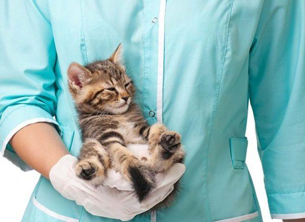 Определить заболевание может только ветеринар