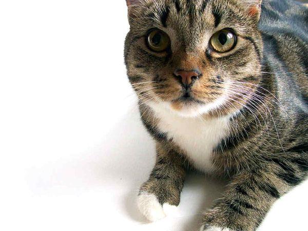 у беременной кошки кровяные выделения перед родами