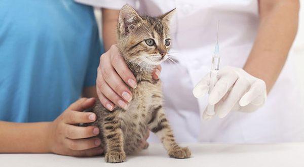 Лечение кошки начинается после обследования