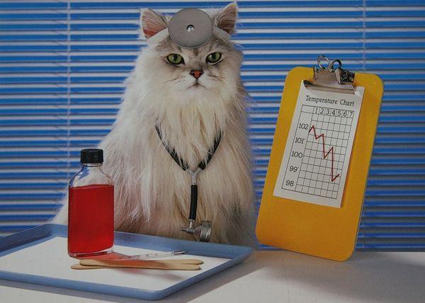Признаки болезней почек у кошек