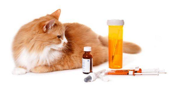 Диагноз проводит ветеринар, который и назначает лечение