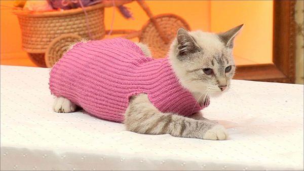 Попону для кошки можно сделать даже из рукава