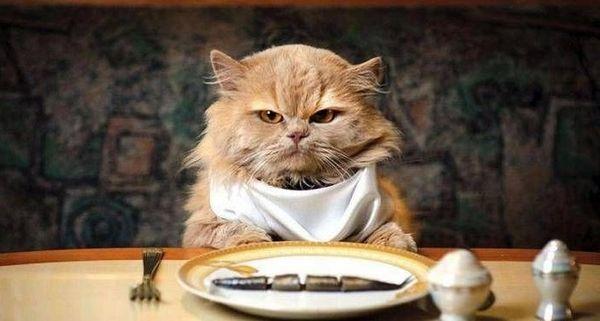 Кошку можно перевести на новый рацион
