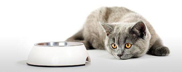 При переходе на новый рацион кота нужно придерживаться правил