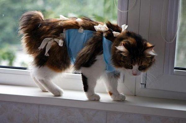 Проблема молочных желез у кота Диагностика заболеваний молочных желез у кота