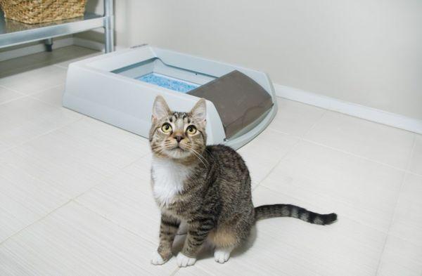 Кошка должна регулярно ходить в туалет