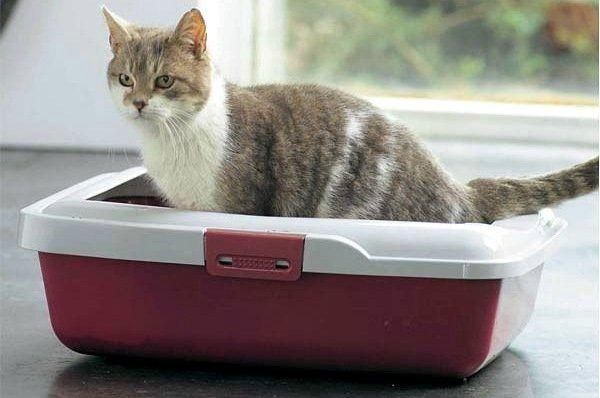 Если кошка не ходит по большому - покажите ее ветеринару
