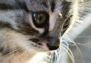 Как назвать котенка мальчика?
